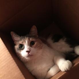 Miss Sophia loves a good box